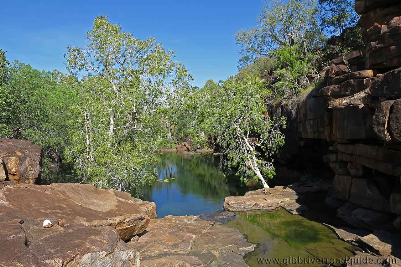 Charnley River Wilderness Camp Lily Pools